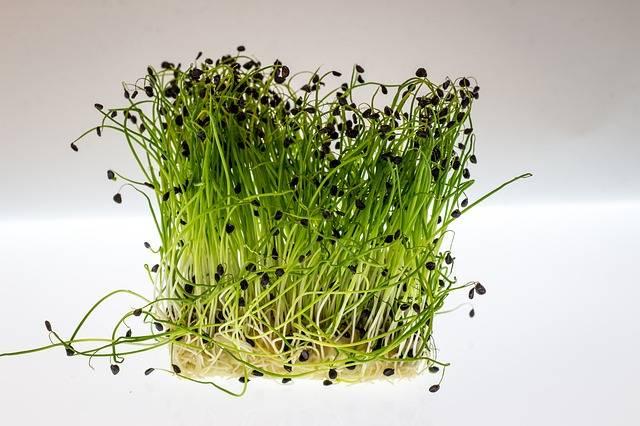 15 alimenti miracolosi per una pelle luminosa: Crescione