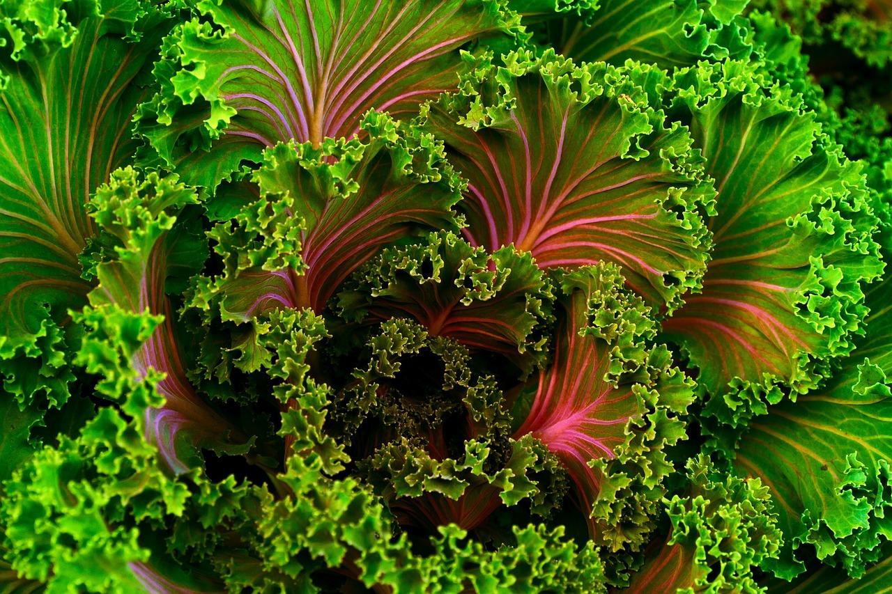 Come-e-perché-pasti-a-base-vegetale-possono-aiutare-a-perdere-peso