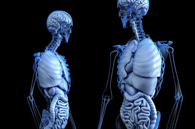 La dieta per la sindrome del colon irritabile (pdf), cosa devi sapere.