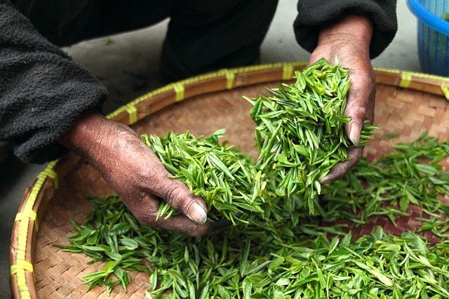 Il tè verde fa dimagrire