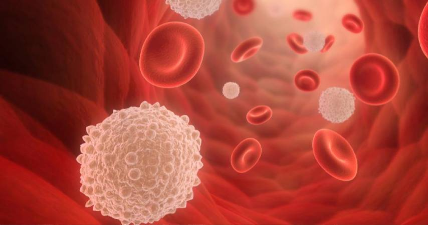 Cosa sono i linfociti: Linfociti T & Linfociti B